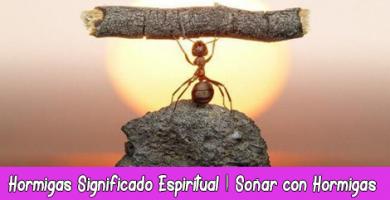 Hormigas Significado Espiritual | Soñar con Hormigas | Tótem Hormiga