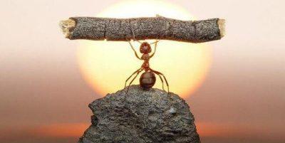 Hormigas Significado Espiritual, simbolico y esoterico