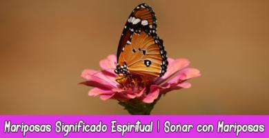 Mariposas Significado Espiritual y Esotérico | Soñar con Mariposas