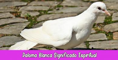 Paloma Blanca Significado Espiritual | Soñar con Palomas