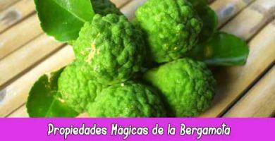 Propiedades Mágicas de la Bergamota