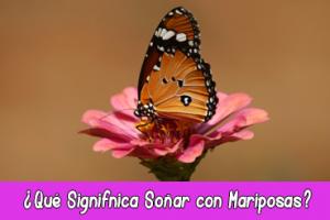 Qué Signifnica Soñar con Mariposas