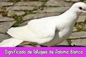 Significado de tatuajes de Paloma Blanca