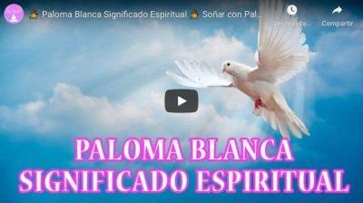 paloma blanca significado espiritual