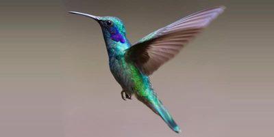 significado espiritual colibrí