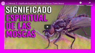 significado espiritual de las moscas