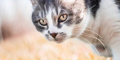 significado espiritual de los gatos