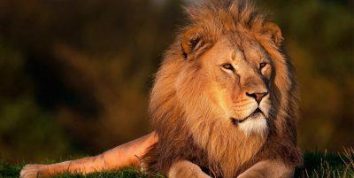 significado espiritual de los leones