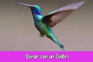 soñar con un colibrí