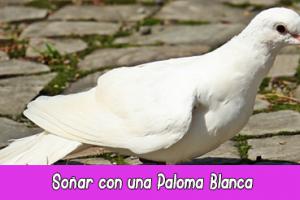 https://www.soyespiritual.top/paloma-blanca-significado-espiritual-sonar-con-palomas-totem-paloma/#So%C3%B1ar-con-Palomas