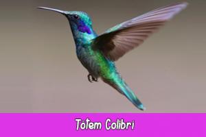 totem animal colibri