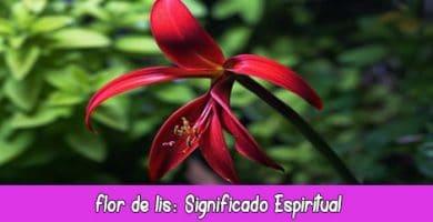 flor de lis significado espiritual